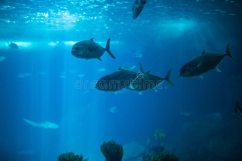 Fish swimming in a reef with blue ocean water aquarium. royalty free stock photos