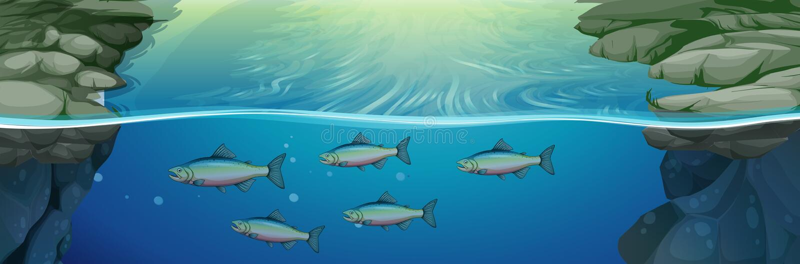 Fish swimming under the river. Illustration royalty free illustration