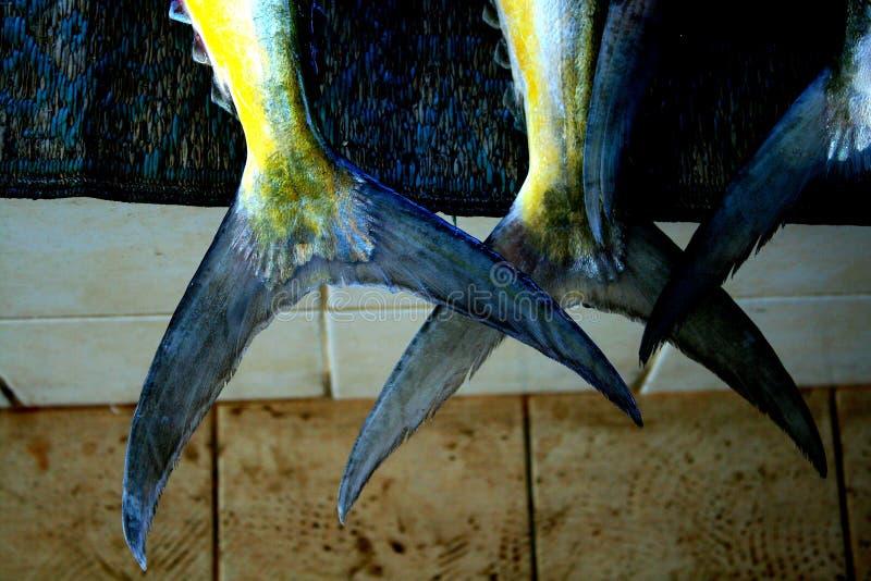 Fish Tails royalty free stock photos