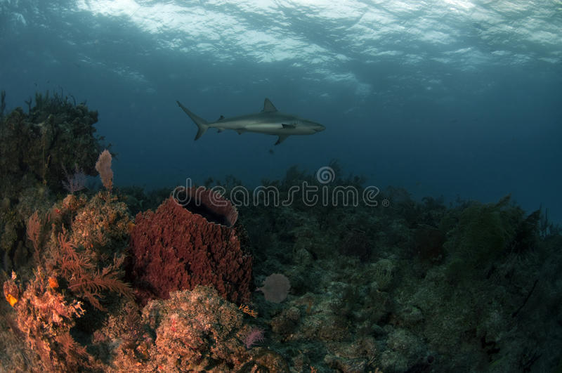 Fish Tale Reef stock images