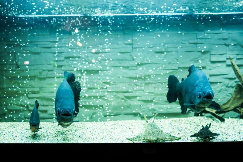 Fish tank aquarium stock images