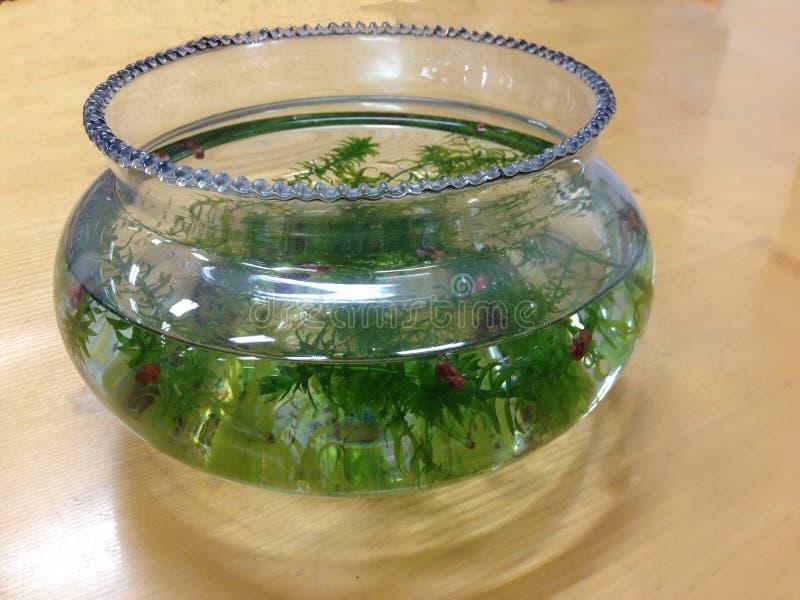 Fish tank aquarium royalty free stock photography