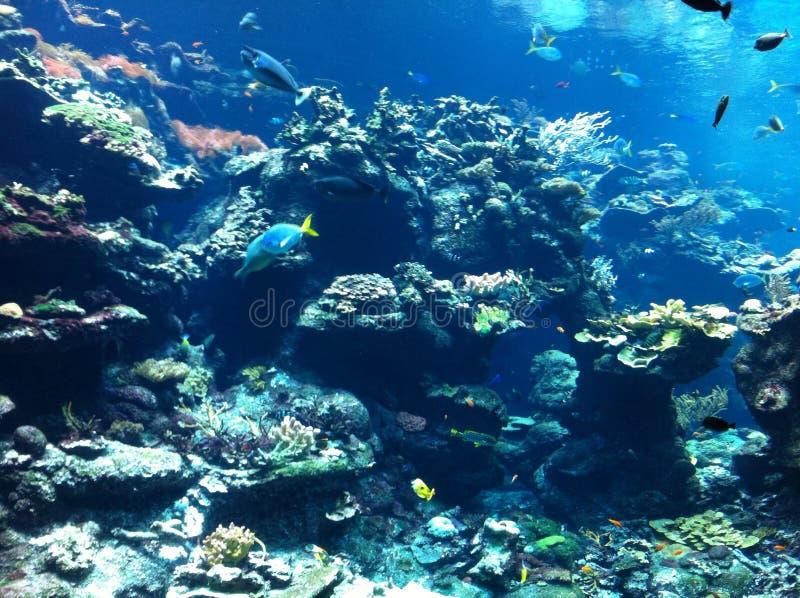 Fish tank stock photo