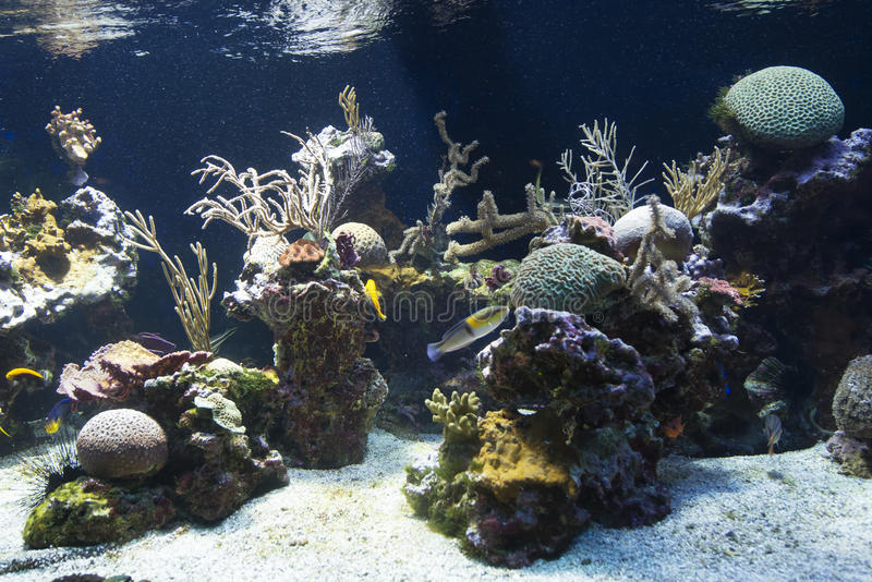 Fish tank at the Oceanographic Museum Monaco. The Oceanographic Museum (Musée océanographique) is a museum of marine sciences in Monaco-Ville, Monaco royalty free stock image