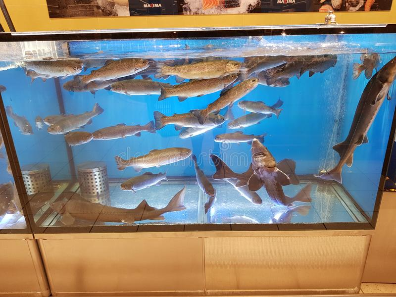 Fish tank in a supermarket water. Fish tank in a supermarket, animal, food, fresh, nature, raw, sea, seafood, water, background, delicious, ocean, healthy stock photos