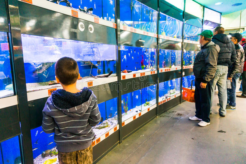 Fish tanks in pet store. People looking at fish tanks in pet store. Hornbach supermarket, Romania royalty free stock photos
