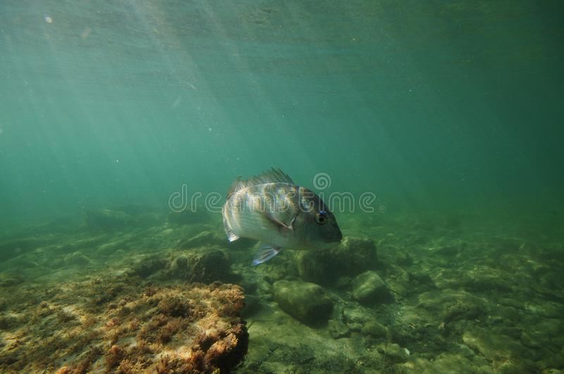 Fish turning away from camera stock photography