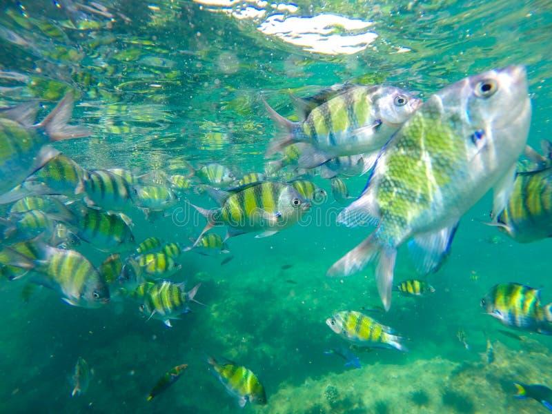 Fish underwater. The Andaman Sea royalty free stock image