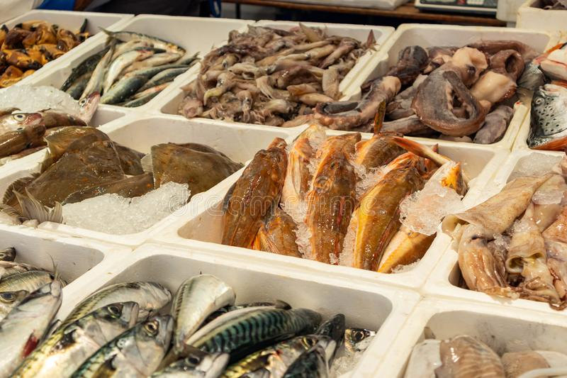 Fish variety for sale at a store display in Rotterdam Netherlands. Fresh fish variety and seafood for sale at a store display in Rotterdam Netherlands. Close up royalty free stock photography
