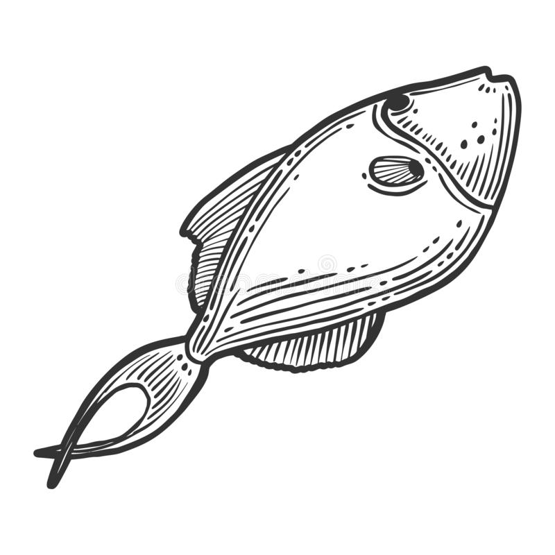 Fish. Vector concept in doodle and sketch style. Hand drawn illustration for printing on T-shirts, postcards. Icon and logo idea, isolated, salmon, white, sea stock photo