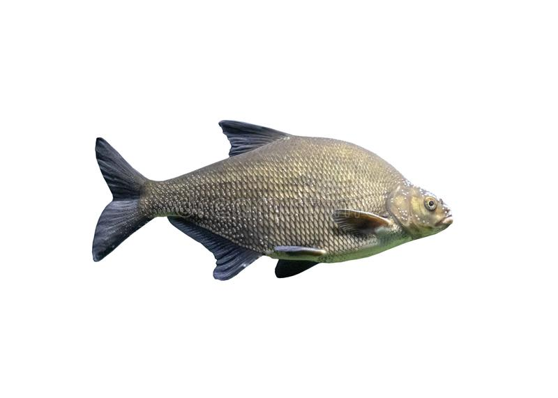 Fish on white background, isolated stock photos
