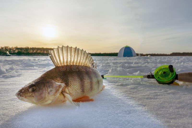 Fish on winter fishing stock photos
