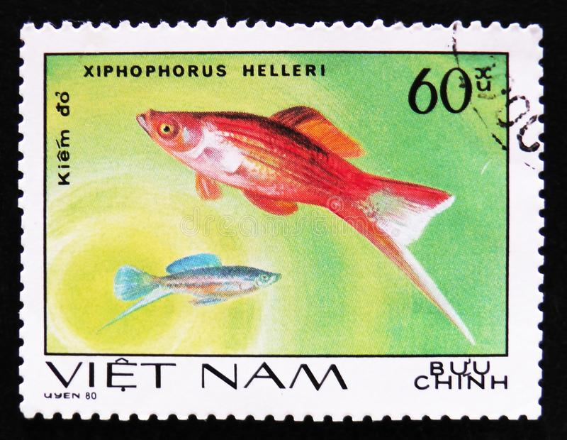 Fish Xiphophorus helleri, Aquarium fishes series, circa 1980. MOSCOW, RUSSIA - APRIL 2, 2017: A post stamp printed in Vietnam shows fish Xiphophorus helleri stock photography