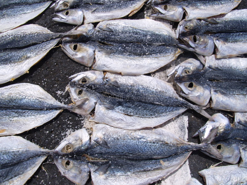 Fish1 stock afbeeldingen