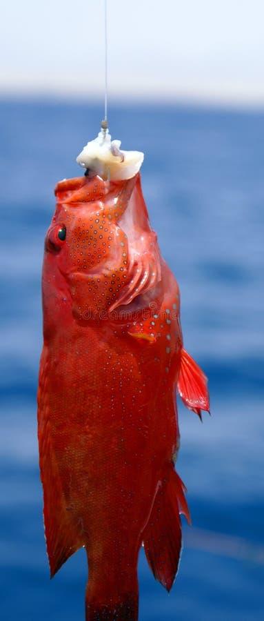 Fish1 stock fotografie