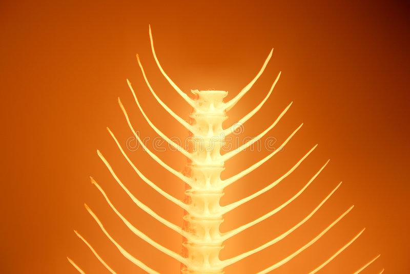 fishbone σειρά στοκ εικόνες με δικαίωμα ελεύθερης χρήσης