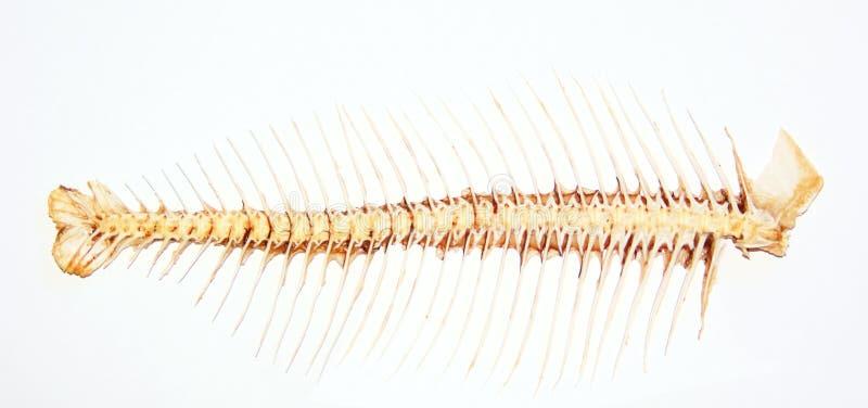 Fishbone lizenzfreie stockfotos