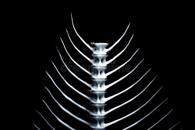 Fishbone reeks [2] royalty-vrije illustratie