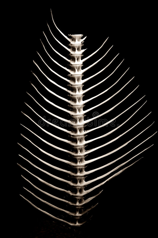 Fishbone reeks [3] stock foto's