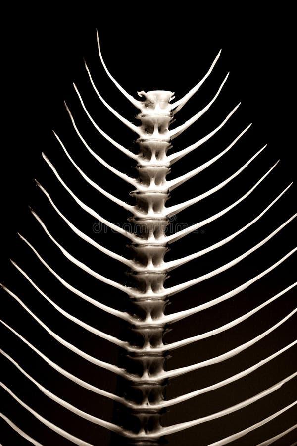 Fishbone Textuur Stock Fotografie