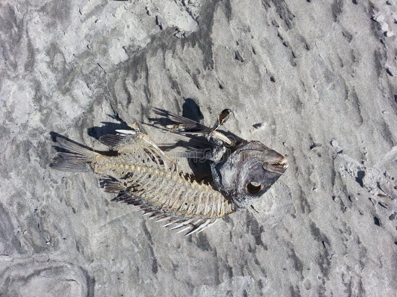 Fishbones StAugustine zdjęcia stock
