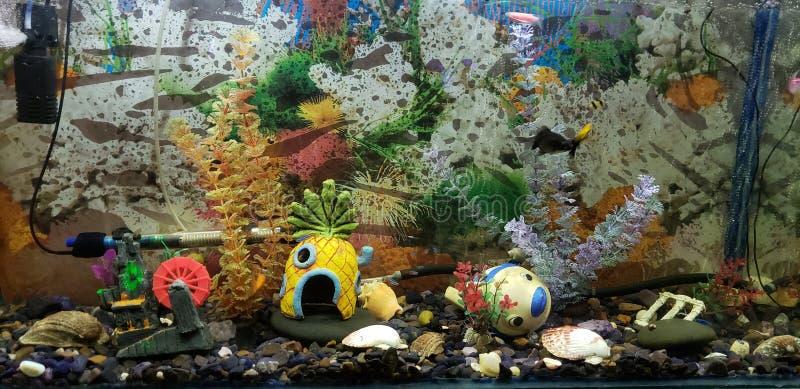 fishbowl foto de archivo