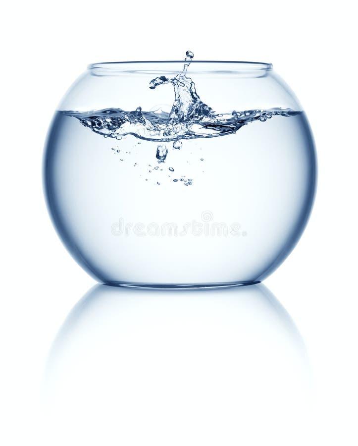 Fishbowl lizenzfreies stockfoto