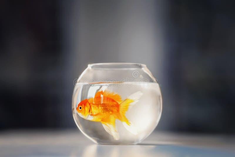 fishbowl fotografie stock