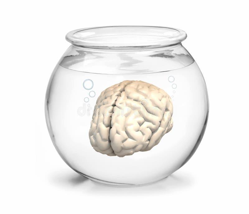 Fishbowl con el cerebro dentro stock de ilustración