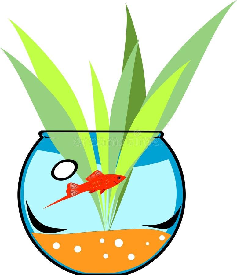 Fishbowl with platies fish