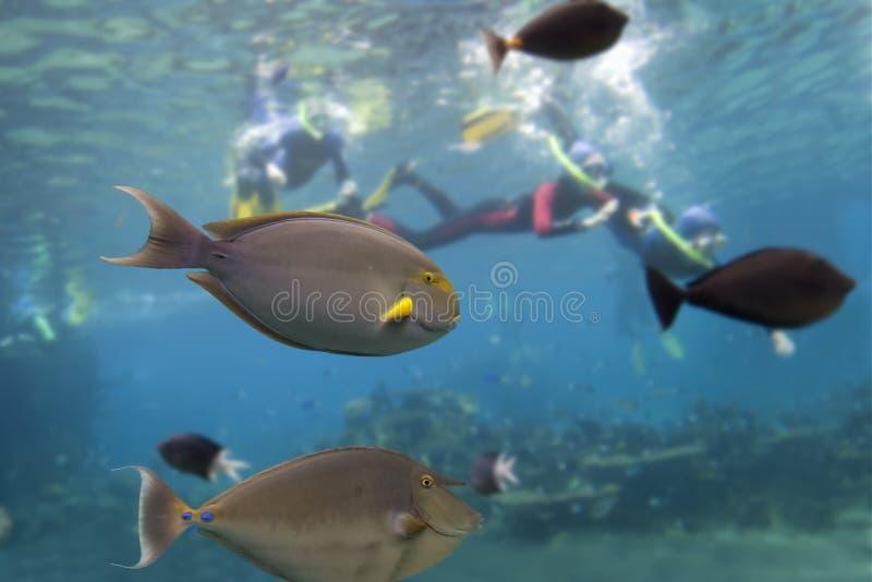 FishDive photographie stock