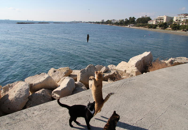 Fisher cat helps helps caught fish. Cyprus, Limassol, Winter, January, quay.Fisher cat helps helps caught fish stock photography