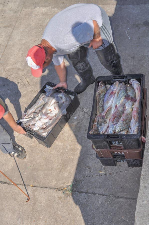 Fisher mężczyzna pracują przy portem Mar Del Plata, w Buenos Aires, Argentyna fotografia royalty free
