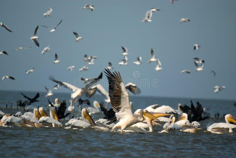 Fisherbirds imagenes de archivo