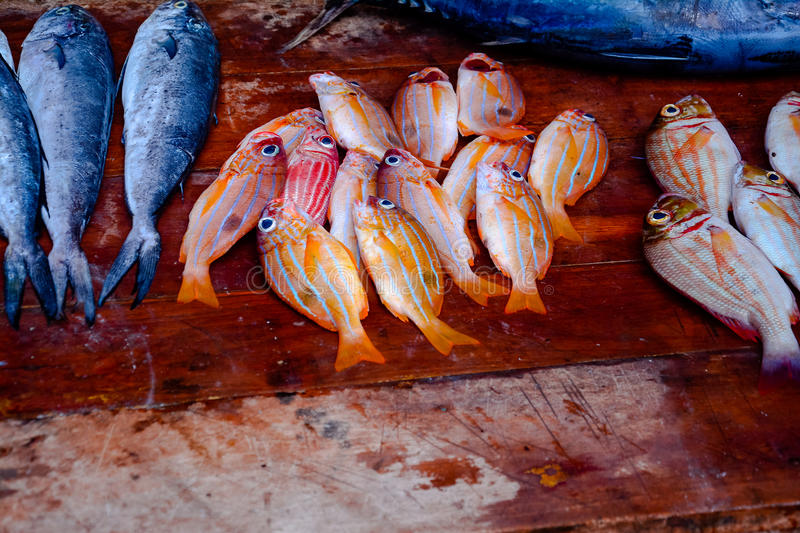 Fisheries Activities And Fish Market In Negombo, Sri Lanka. Negombo Is Known For Its Centuries Old Fishing Industry With Busy Fish Markets And Long Sandy stock photography