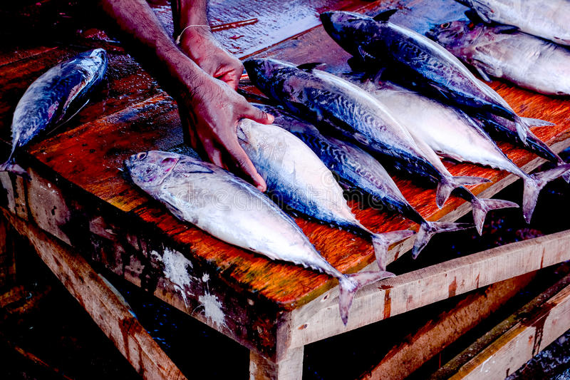 Fisheries Activities And Fish Market In Negombo, Sri Lanka. Negombo Is Known For Its Centuries Old Fishing Industry With Busy Fish Markets And Long Sandy stock photos