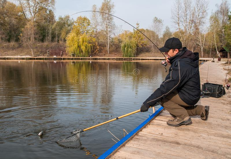 Fisherman in action taking fish by landing net. Area trout fishing stock photo