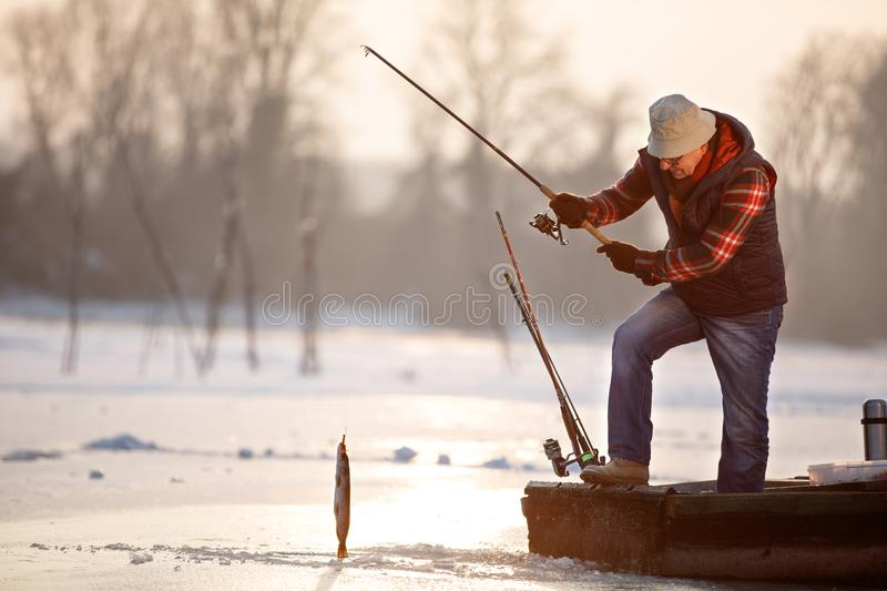 Fisherman draws out fish from cold water on winter stock image
