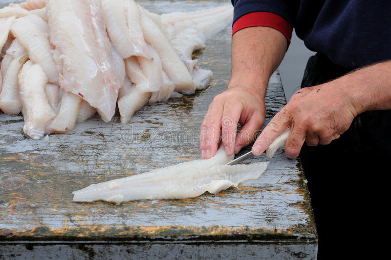 Fisherman filleting cod stock image