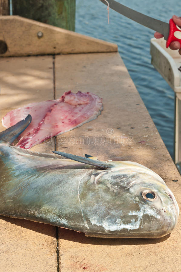 Fisherman filleting a large permit fish. Fisherman filleting a large, twelve pound permit fish at a public cleaning station in a tropical harbor on the Gulf of stock photo