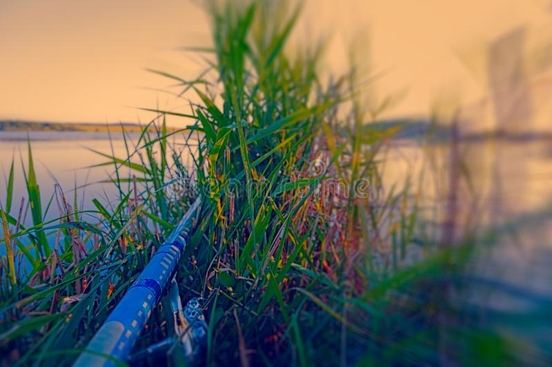 The fisherman hid in the grass. A long pole sticking out of tall green grass. Evening fishing. A wide flat river royalty free stock photography