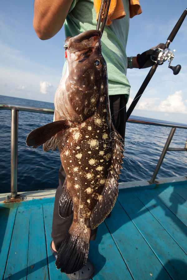 Fisherman holding a big grouper on fishing boat in Andaman, Thai stock images