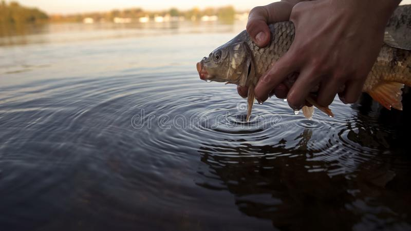 Fisherman holding fish, releasing carp fish back to river, fishing competition stock photo