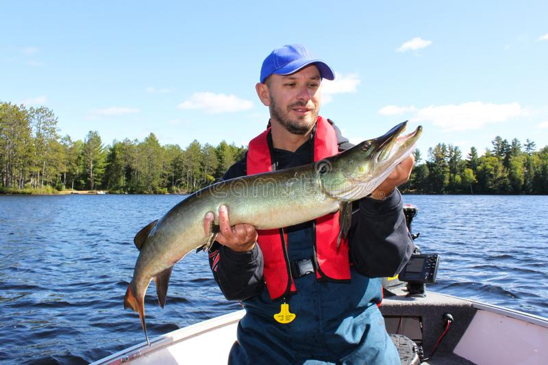 Fisherman Holds a Muskie Caught Fishing stock photography
