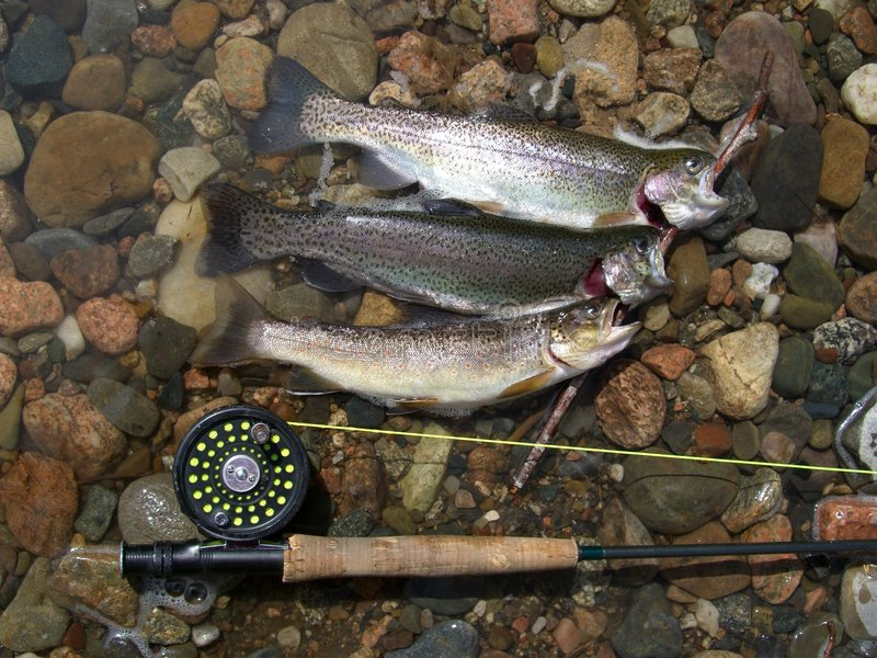 Fisherman's Luck stock photography