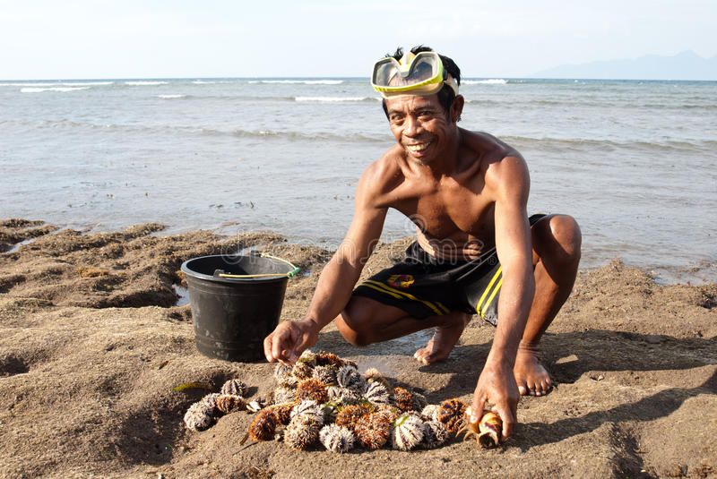 Download Fisherman with sea urchins editorial stock image. Image of grass - 15694789