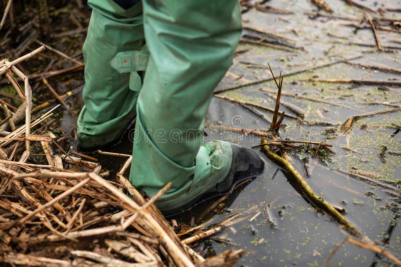Fisherman stands in the water in rubber waterproof boots for fishing stock images