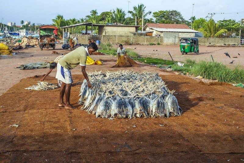 Fisherman staples fish at the beach stock photos