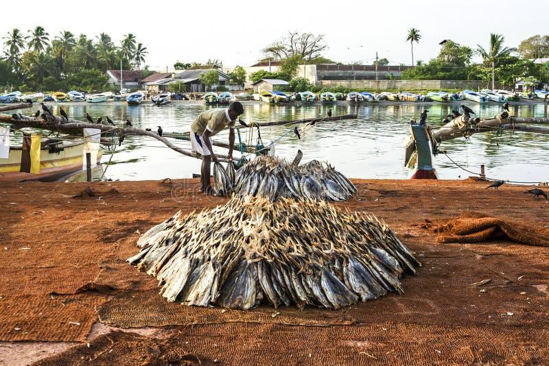 Fisherman staples fish at the beach royalty free stock photo