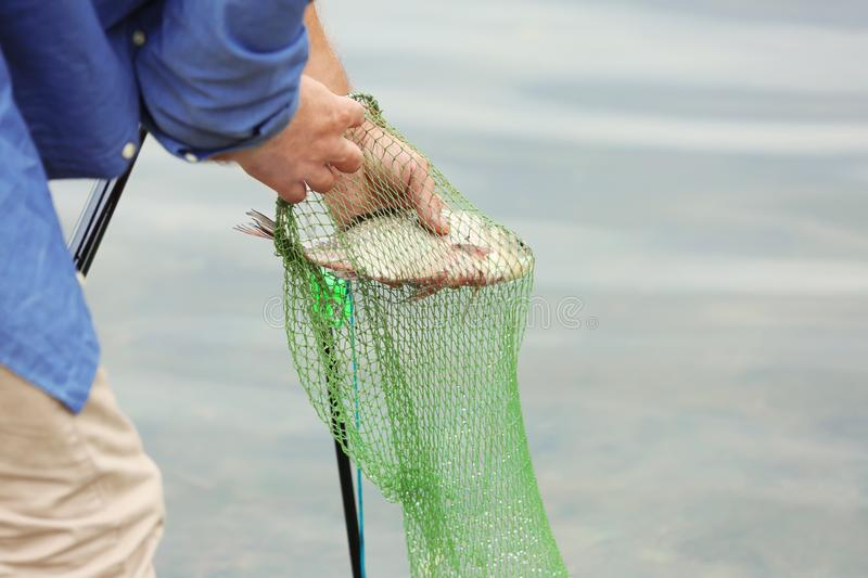 Fisherman taking caught fish out of net, stock photo